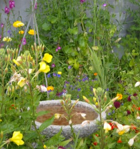 My own little wildflower corner in the garden - always alive with bees and butterflies