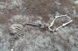 lollygagging skeleton
